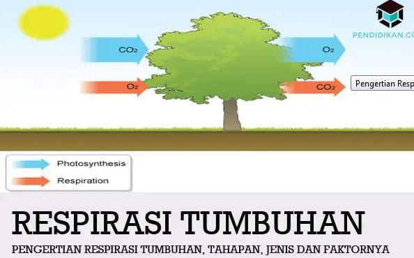 respirasi-tumbuhan